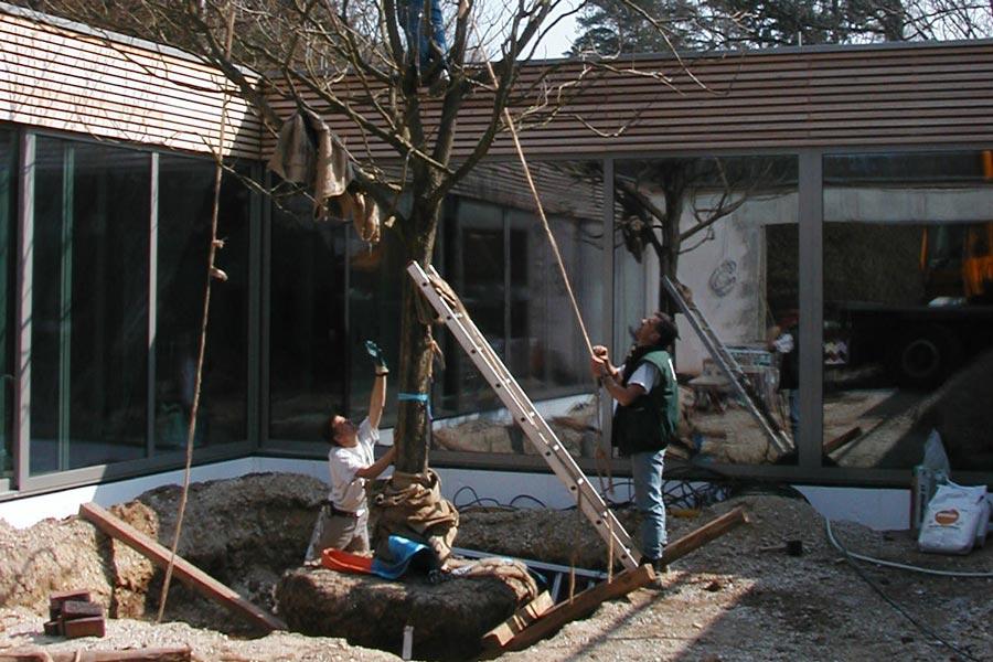 Pflanzung von Baum